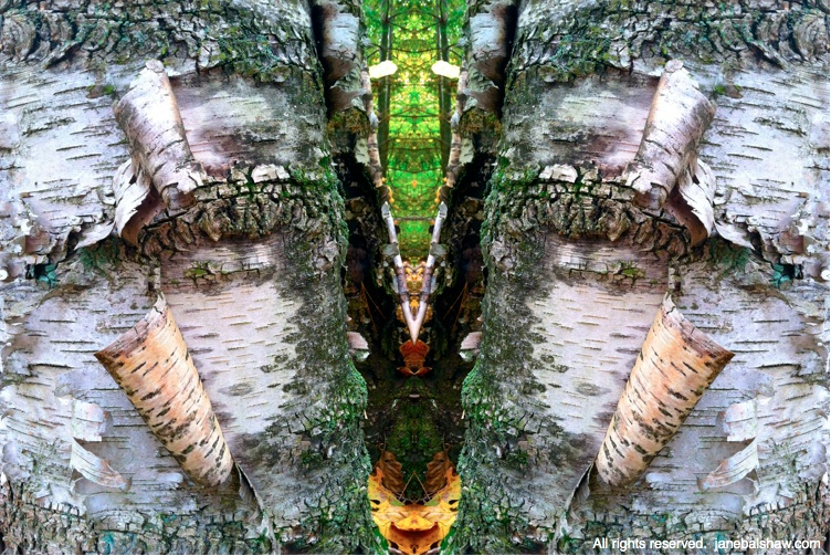 forest mirror image