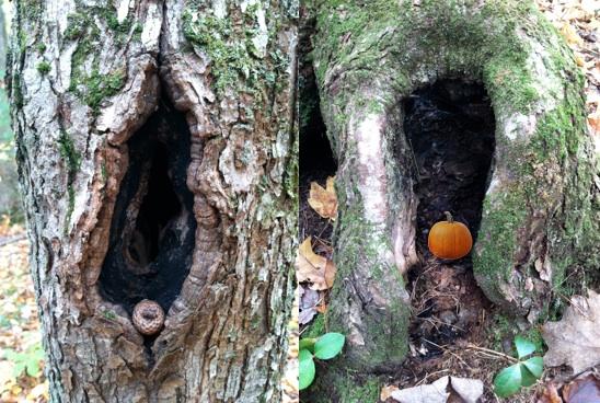 pumpkin tree trunk 2
